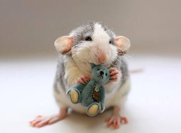Rats With Teddy Bears ellen van deelen jessica florence 17 (1)