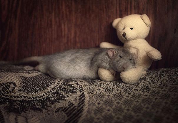 Rats With Teddy Bears ellen van deelen jessica florence 18 (1)