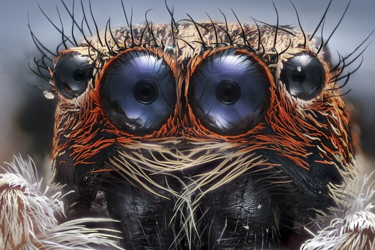Winners of the 2017 Nikon Small World Photomicrography Competition 1 (1)