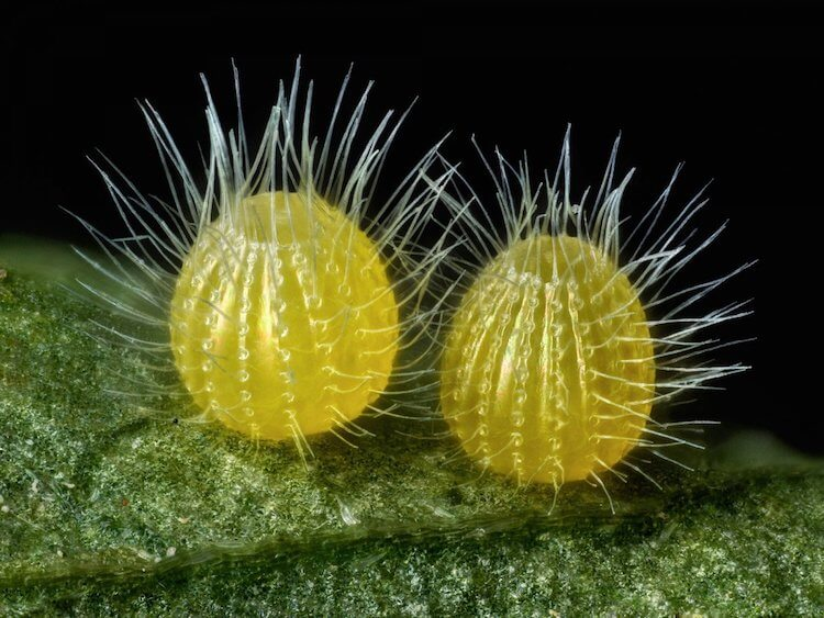 Winners of the 2017 Nikon Small World Photomicrography Competition 14 (1)