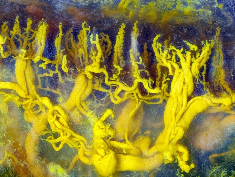 Winners of the 2017 Nikon Small World Photomicrography Competition 9 (1)