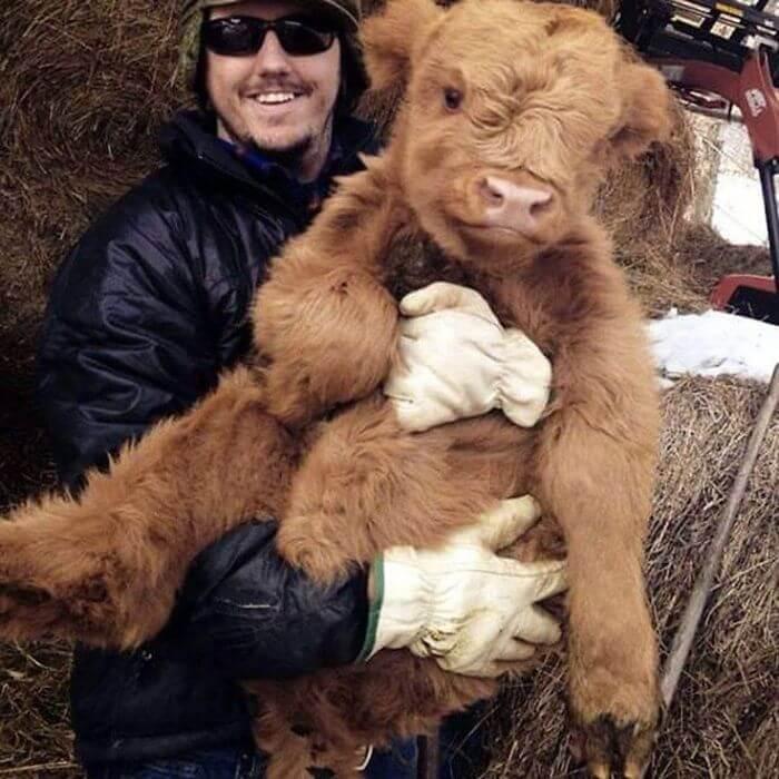 baby calfs 7 (1)