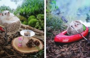camping tiny hedgehog azuki feat (1)