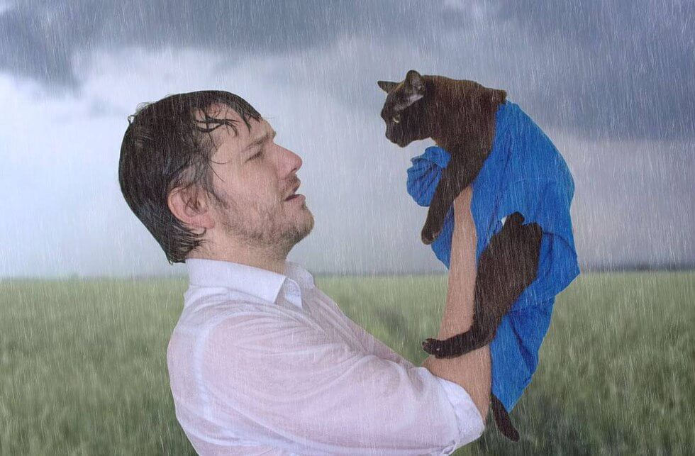 cat and human recreate famous movie scenes 1 (1)