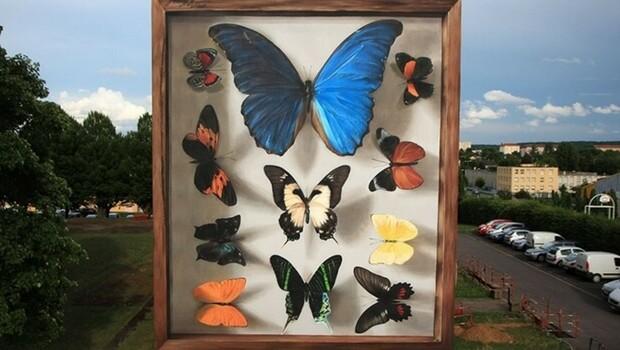 mantra butterflies feat (1)