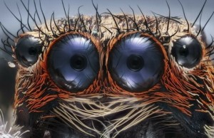 nikon small world microphotography competition feat (1)