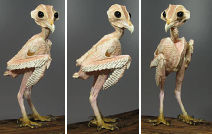owl without feathers 1 (1)