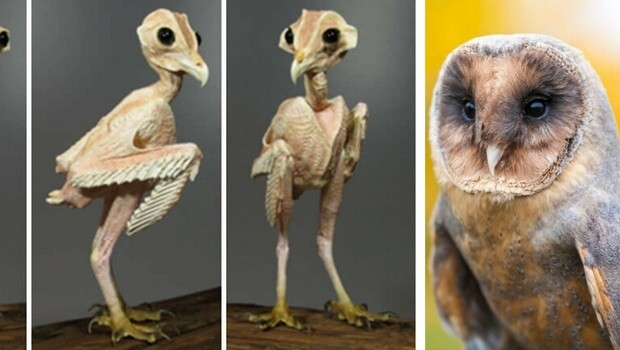 a picture of an owl without feathers is more than the