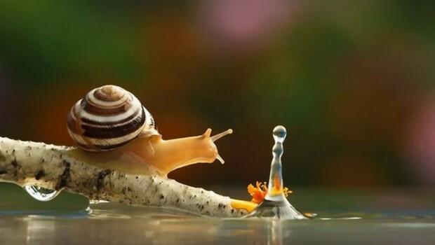 photos of snails feat (1) (1)