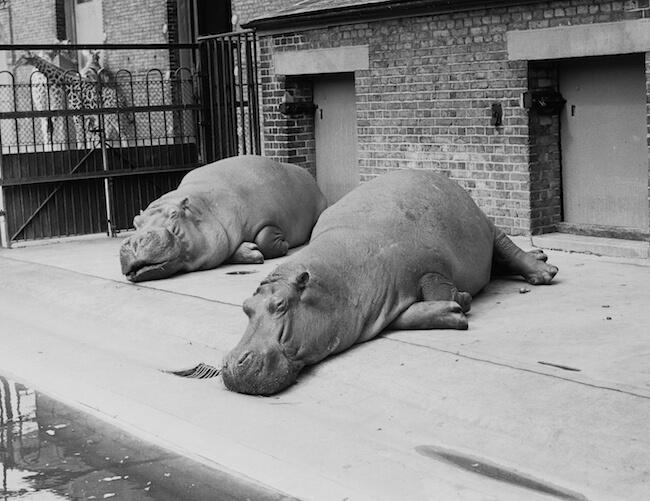 pregnant animals 24 (1)