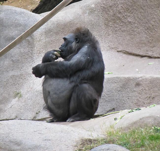 pregnant animals 25 (1)