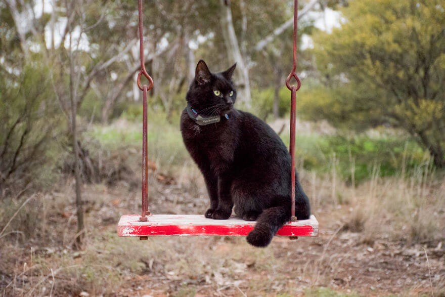 rich east traveling australia with cat 8 (1)