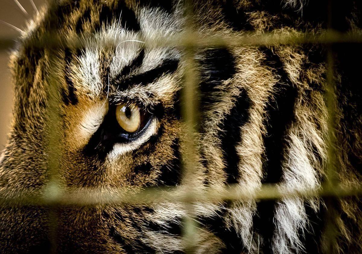 stunning animal images 10 (1)