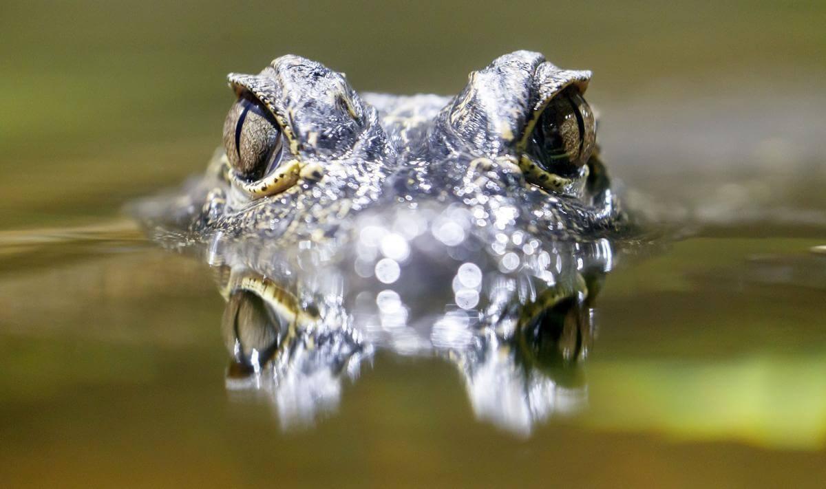 stunning animal images 14 (1)
