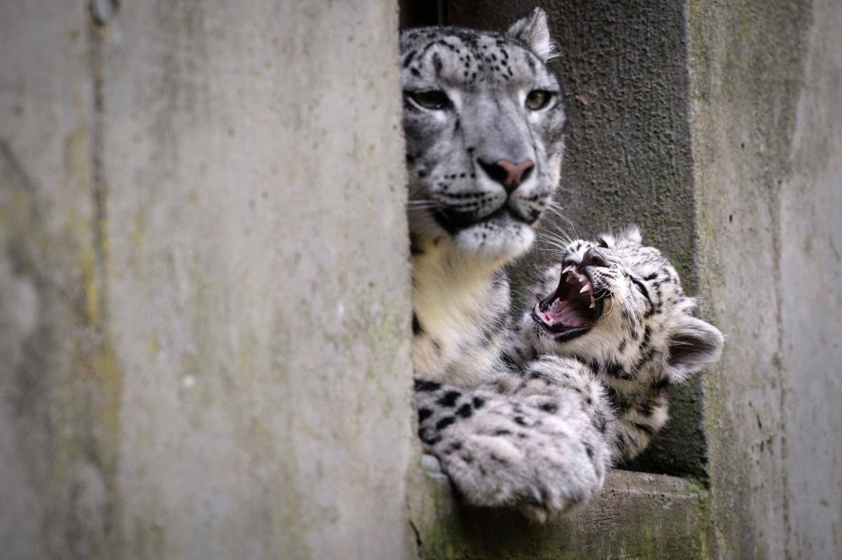stunning animal images 15 (1)