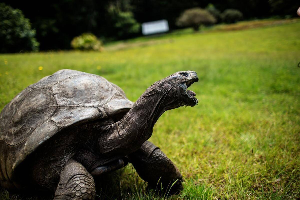 stunning animal images 17 (1)