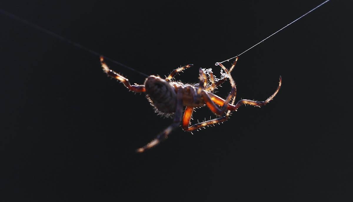 stunning animal images 18 (1)