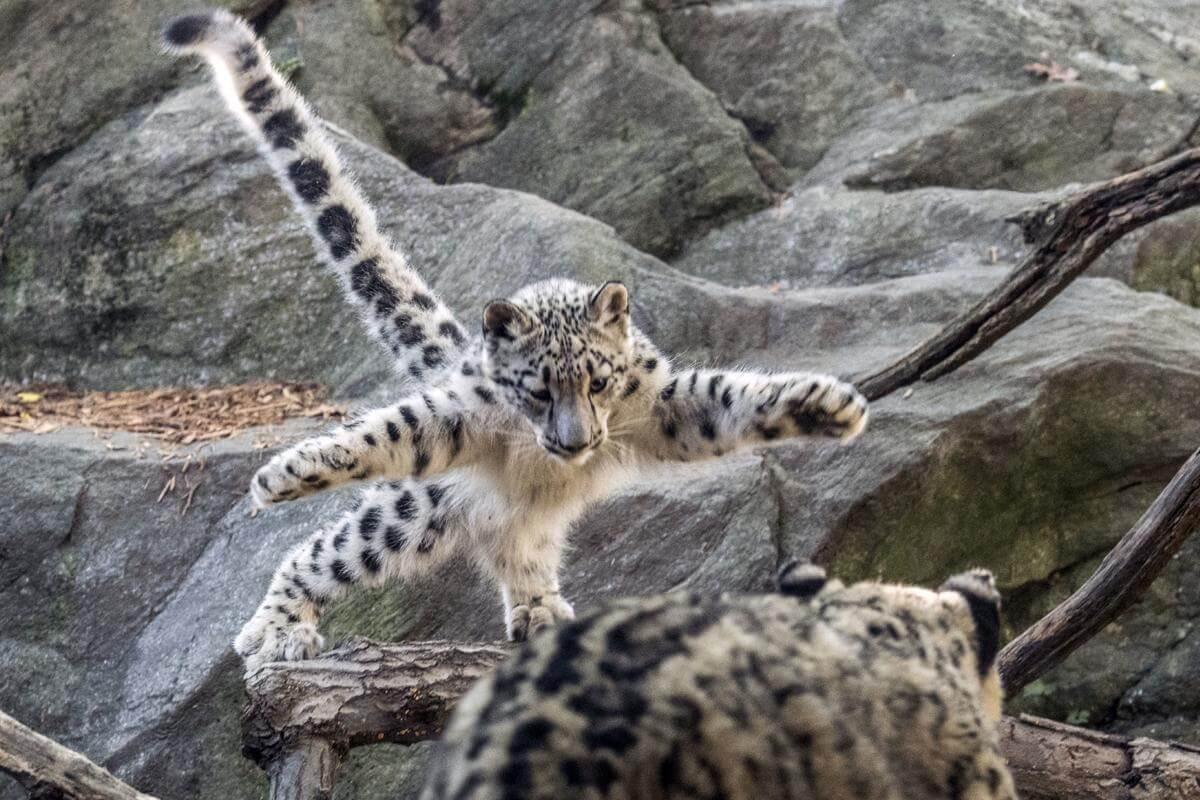 stunning animal images 19 (1)