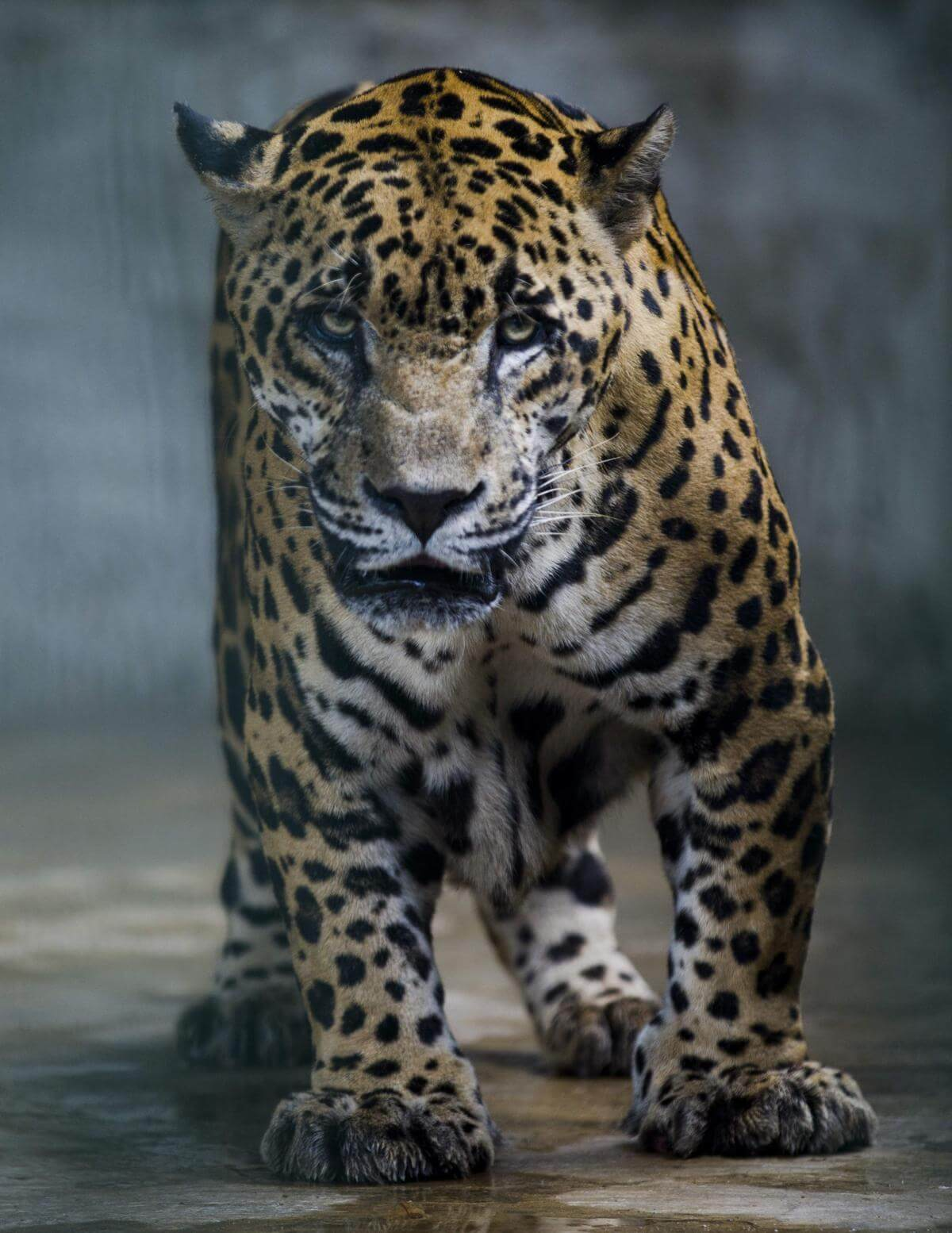 stunning animal images 23 (1)