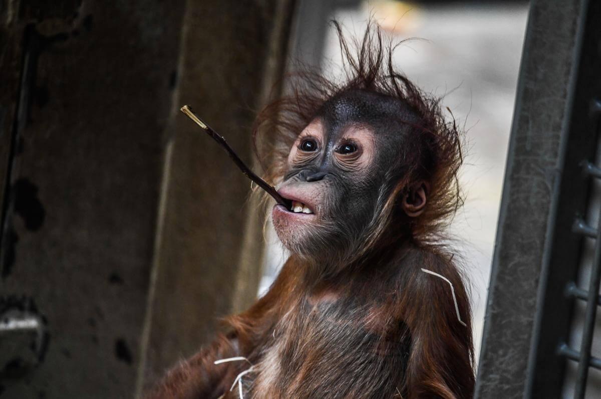 stunning animal images 26 (1)