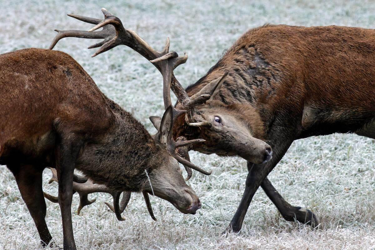 stunning animal images 29 (1)
