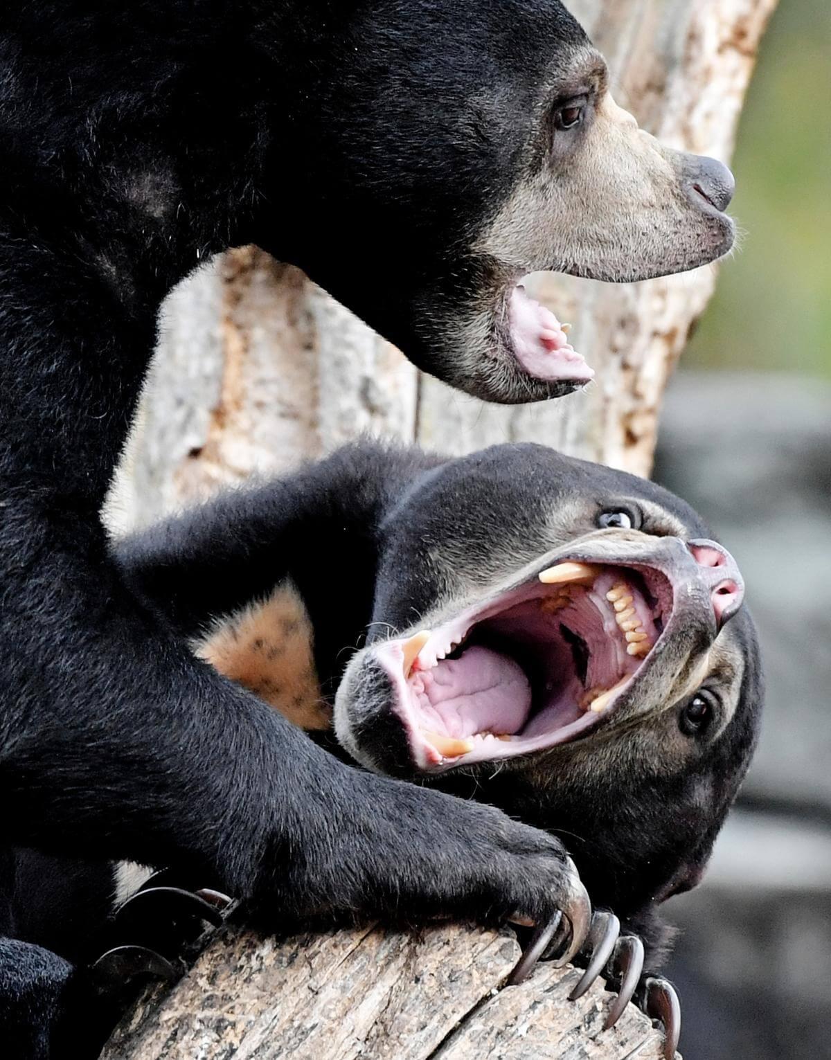 stunning animal images 5 (1)