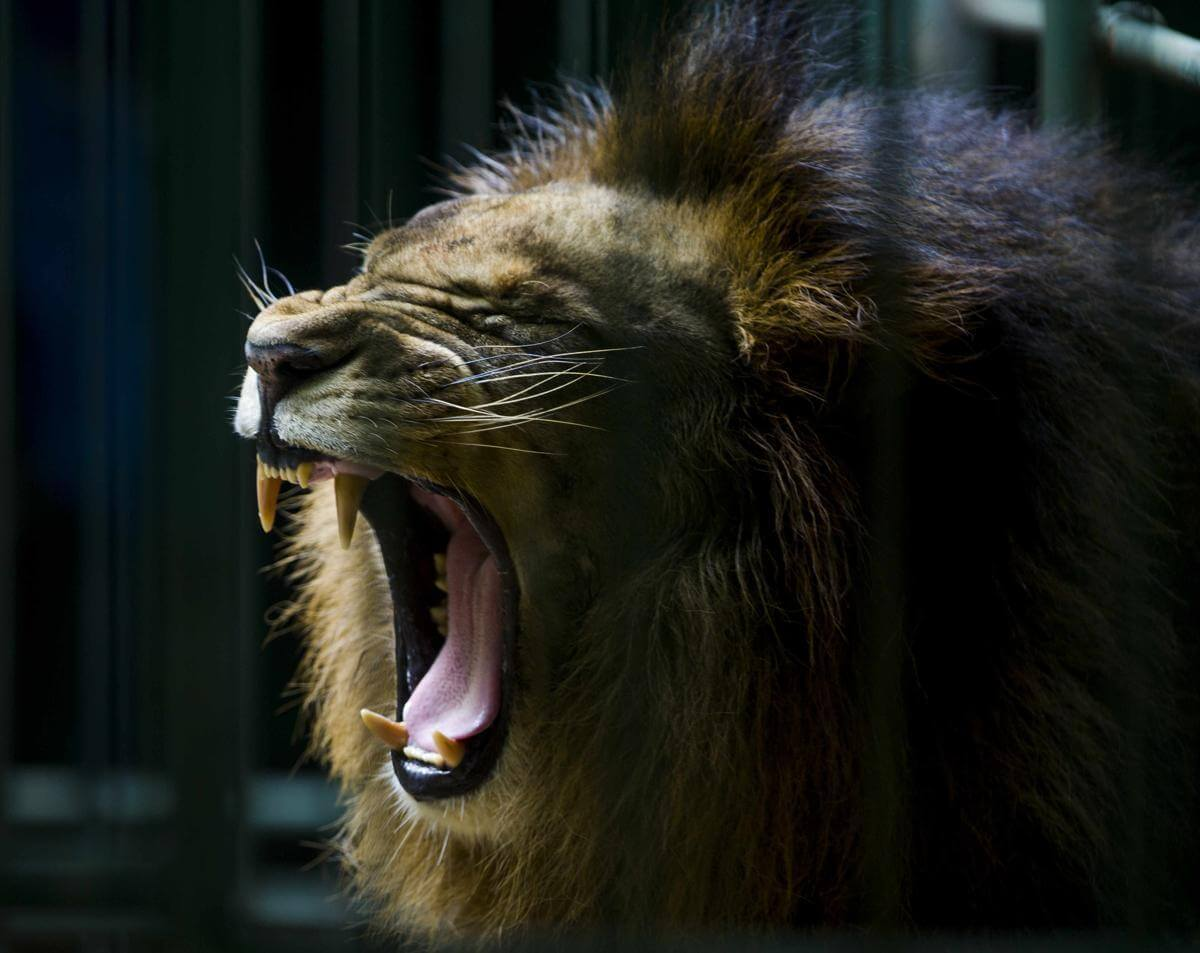 stunning animal images 7 (1)