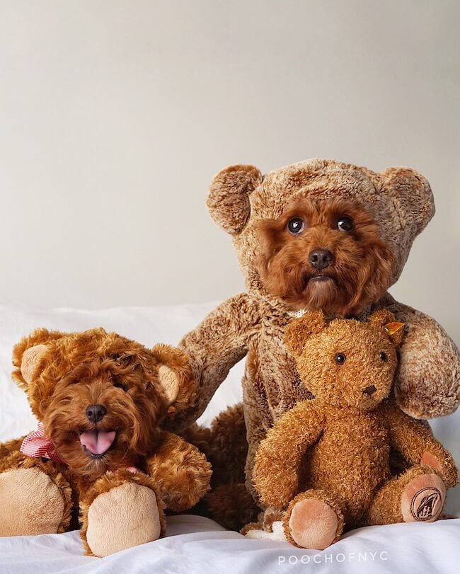 teddy bear pictures 13 (2)