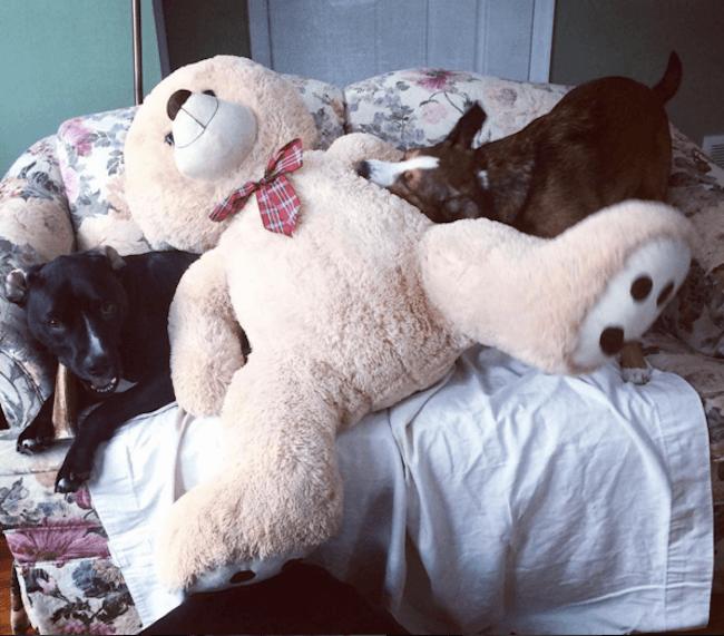 adorable teddy bear photos 27 (1)