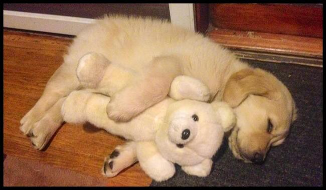 teddy bear pics 5 (2)