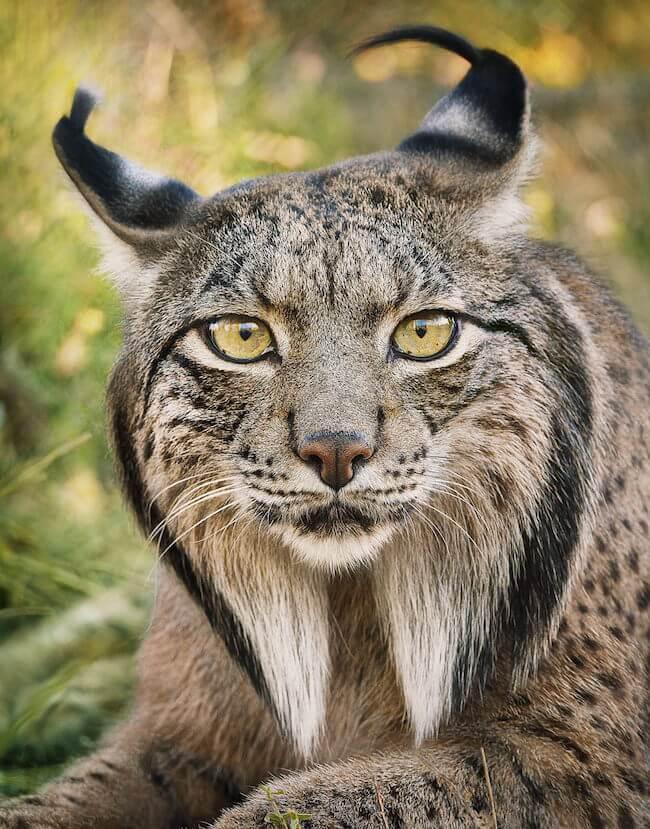 tim flatch endangered animal 1 (1)