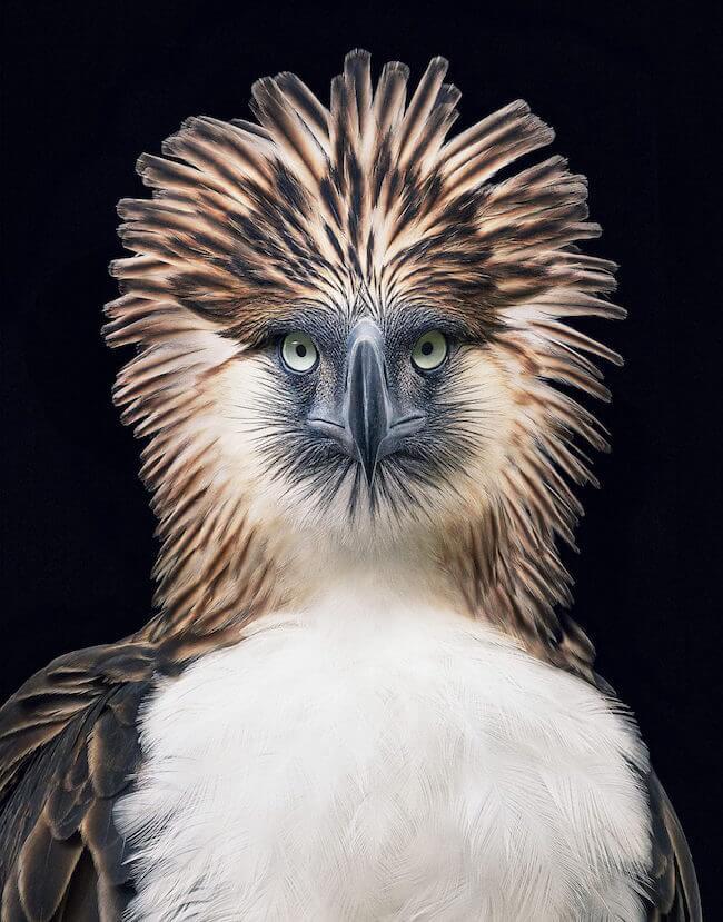tim flatch endangered animal 15 (1)