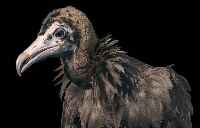 tim flatch endangered animal 16 (1)