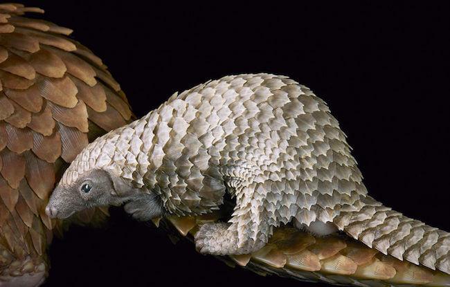 tim flatch endangered animal 19 (1)