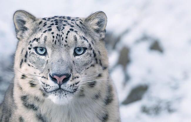 tim flatch endangered animal 2 (1)
