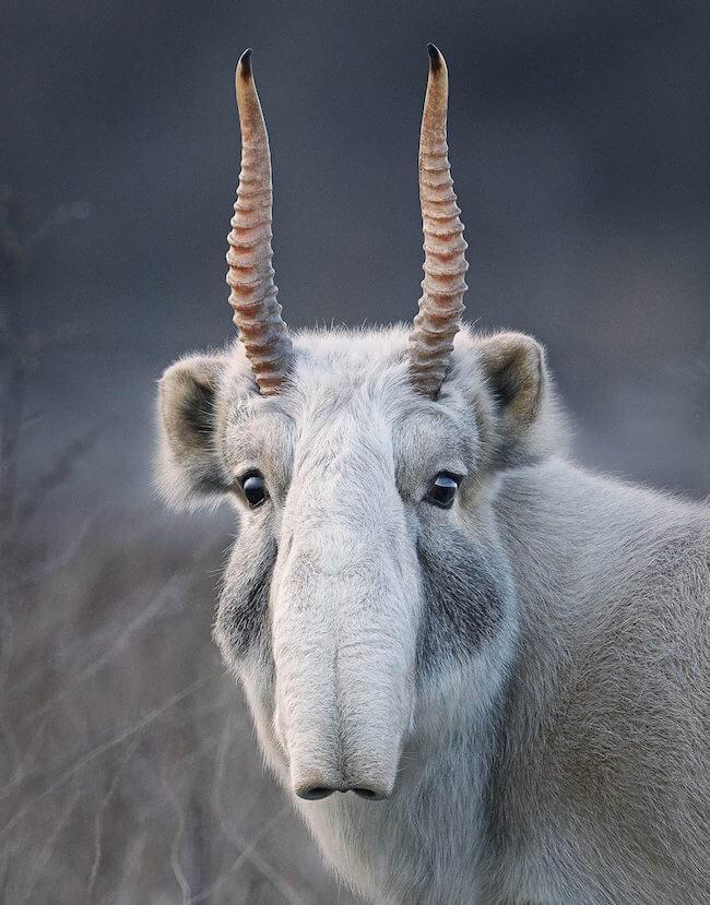 tim flatch endangered animal 3 (1)