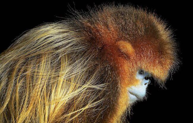 tim flatch endangered animal 7 (1)