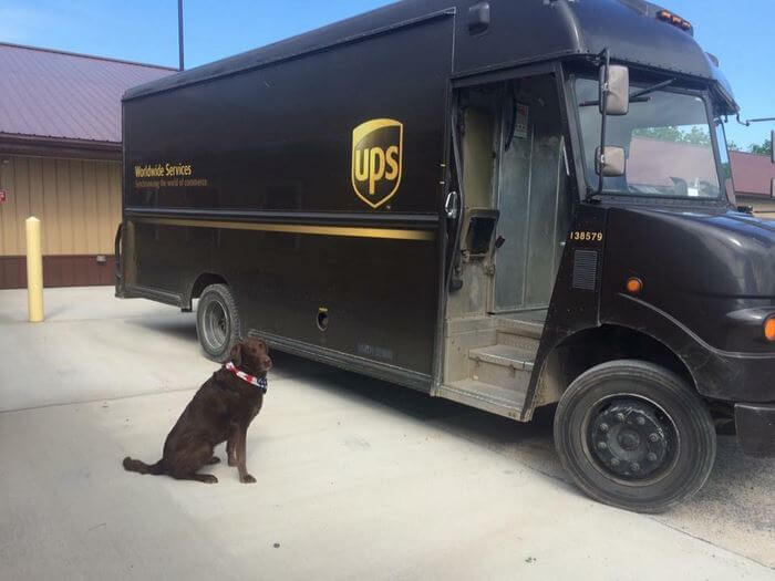 ups driver dog meeting group 10 (1)