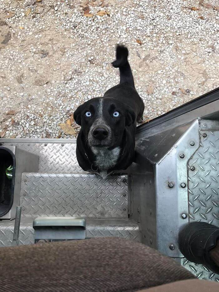 ups driver dog meeting group 14 (1)