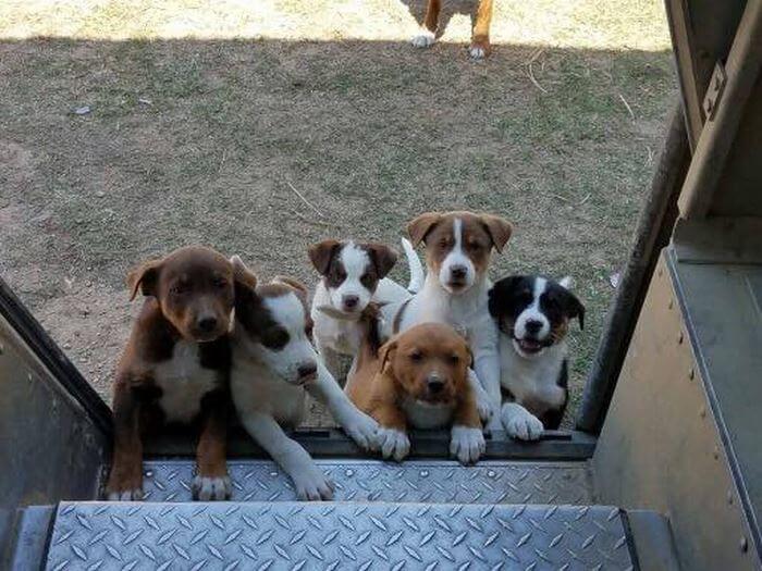 ups driver dog meeting group 17 (1)