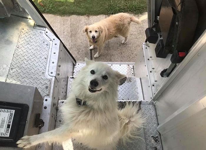 ups driver dog meeting group 2 (1)