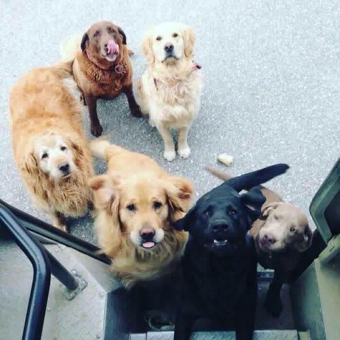 ups driver dog meeting group 3 (1)