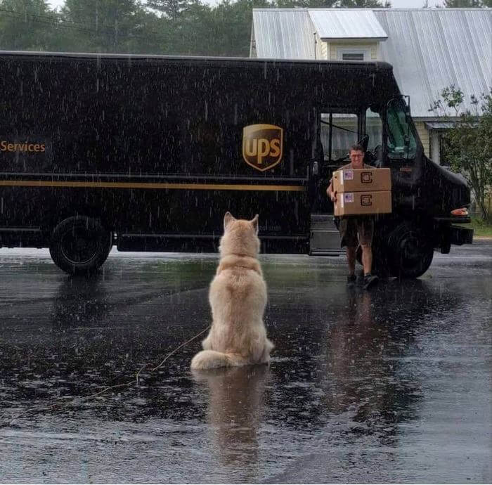 ups driver dog meeting group 4 (1)