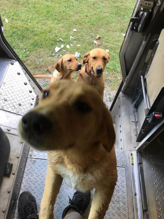 ups driver dog meeting group 7 (1)