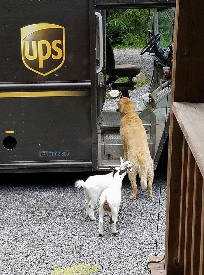 ups driver dog meeting group 9 (1)