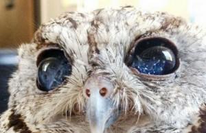zeus the blind owl feat (1)