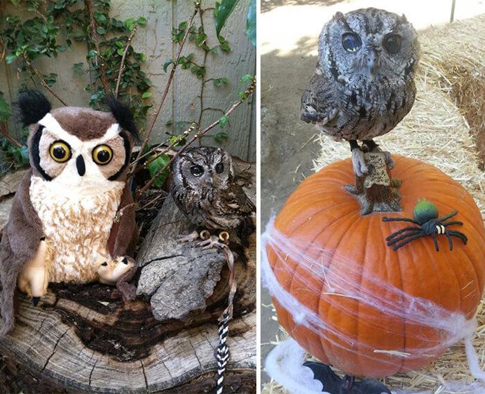 zeus the owl (1)