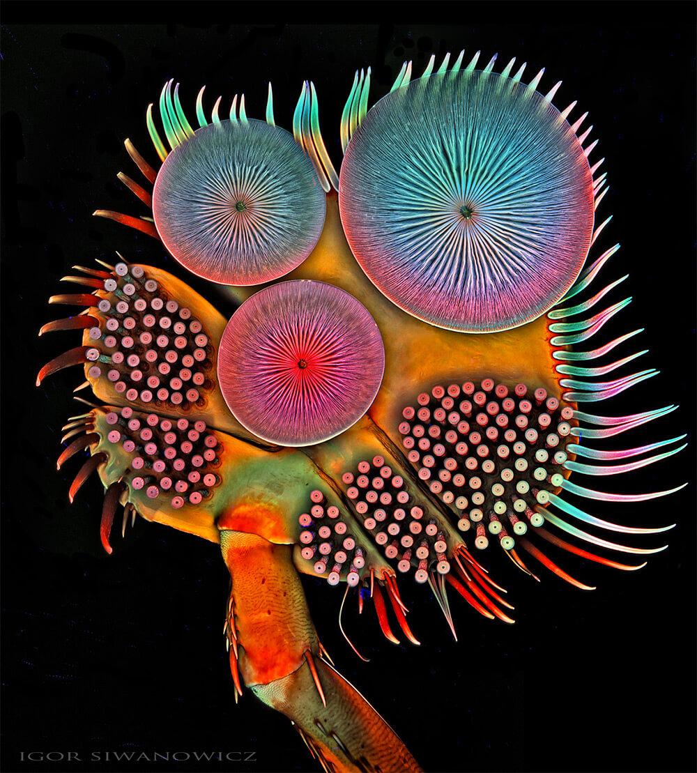 Igor Siwanowicz microscope insect photos 1 (1)