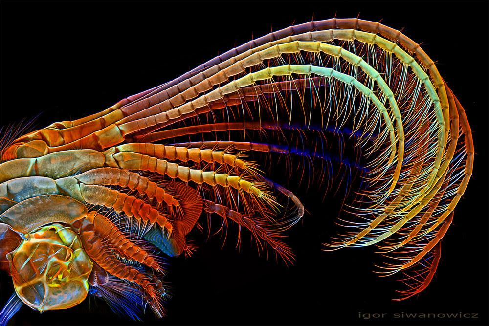 Igor Siwanowicz microscope insect photos 2 (1)