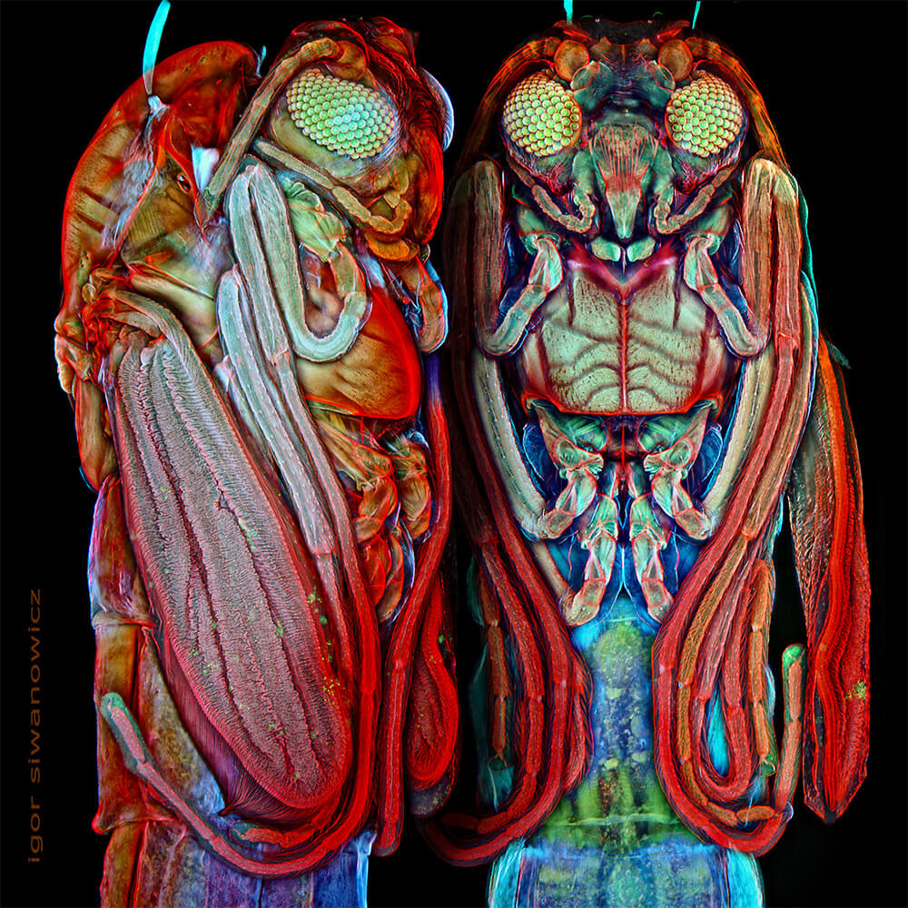 Igor Siwanowicz microscope insect photos 3 (1)